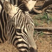 out of africa wildlife park reviews